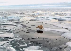 melting-polar-ice-caps1